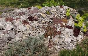 Steingarten Bilder Beispiele : beispiel f r einen steingarten garten ~ Watch28wear.com Haus und Dekorationen