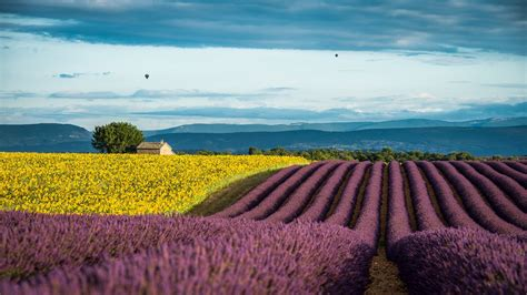 france provence   field lavender sunflowers summer