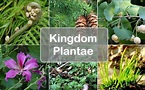 Kingdom Plantae (Plants): Definition, Characteristics ...