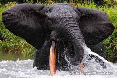 Bedreigde dieren - Stichting No Wildlife Crime