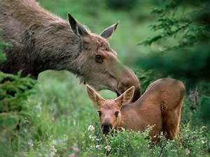 Riparian Life Zones Mammals