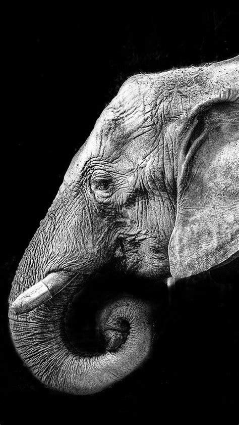 Photos fond ecran iphone 6 noir et blanc page 4 | p༶i̤͓ϰ