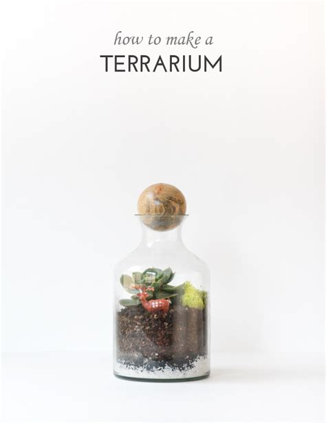 terrarium how to how to make a terrarium
