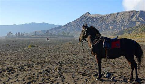 wisata gunung bromo  jawa timur  pesona
