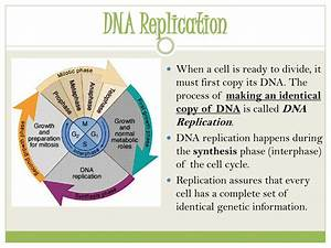 Ppt - Genetics Powerpoint Presentation  Free Download