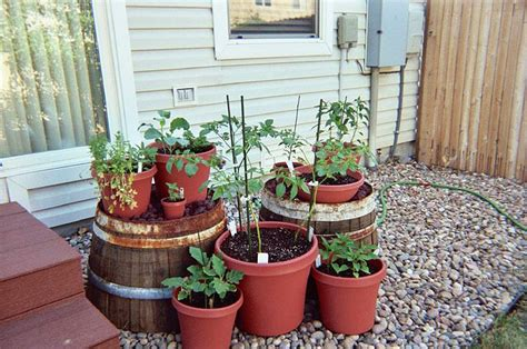 vegetable container gardening ideas how to get started