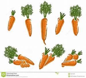 Carrot set. Vector stock vector. Illustration of carrots ...