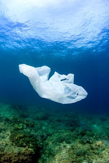 countries  banned plastic bags studycom