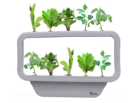 + Images About Mini Hydroponics On Pinterest