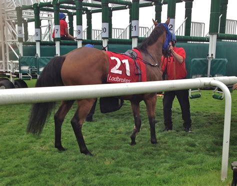 leg horse stall breaks stalls shot dead startled starting rears leaves foreleg left down doncaster broke horrific scenes animal traps