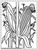 Coloring Pages Corn Printable Cornfield Cob Field Stalks Indian Wheat Drawing Plant Farm Sweet Sheets Drawings Getdrawings Preschool Lovely Realistic sketch template