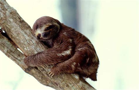 Animal Dormeur by Animaux Le Top 5 Des Gros Dormeurs Geo