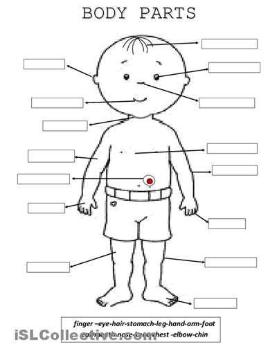 printable body parts worksheets  kindergarten