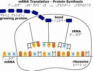Protein Synthesis Kit Guidebook