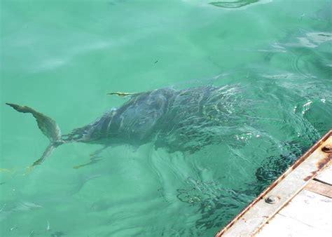 ha xel cancun fish lagoon snorkeling largest preyerplanning