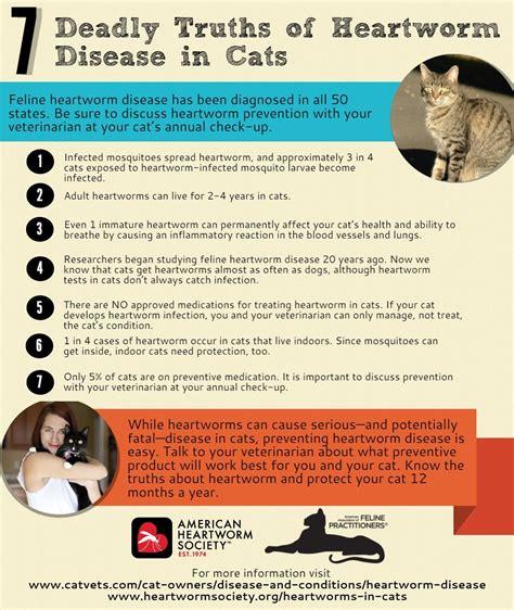 heartworm treatment feline health library of cat hospital of chicago