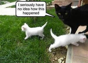 30 Funny animal captions - part 11 (30 pics)   Amazing ...