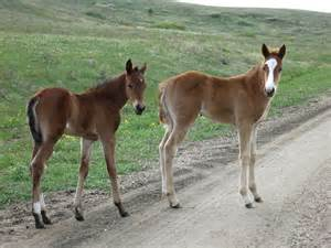 Pictures of Horse Having Baby Horses