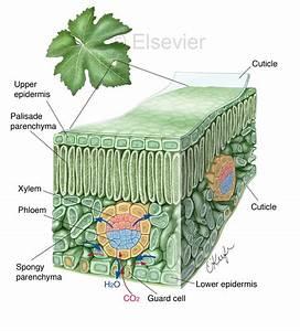 Biomedical Illustrator