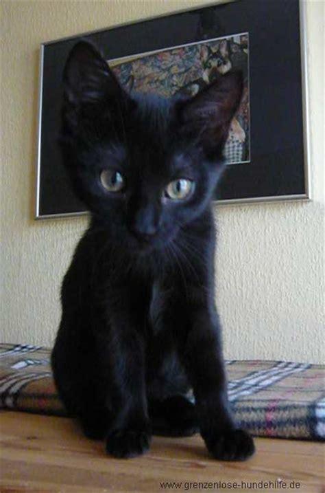 tiervermittlung katzen babykatzen katzenbabys katze