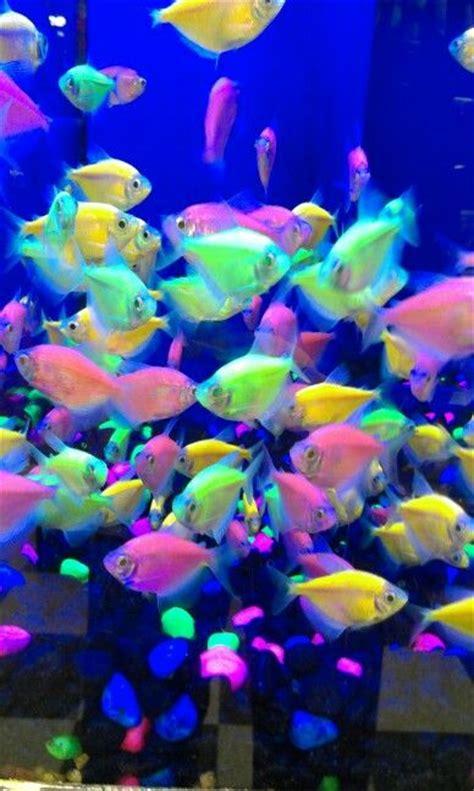 black light aquarium glo fish so cool fish pets protein and