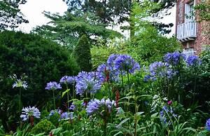 Plantes à Feuillage Persistant : plante vivace feuillage persistant liste ooreka ~ Premium-room.com Idées de Décoration
