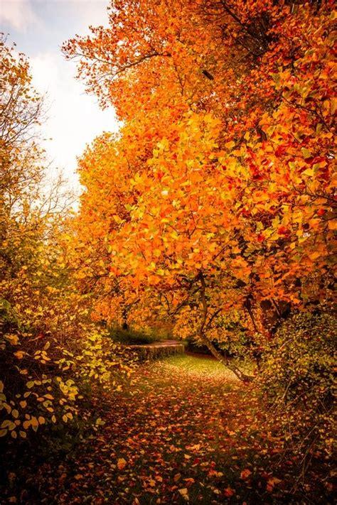 beautiful autumn landscape  warm colors stock photo