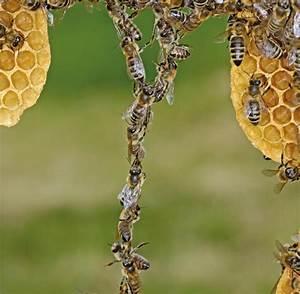 Warum Machen Bienen Honig : sirup statt honig ersatz zucker beeinflusst genaktivit t von bienen welt ~ Whattoseeinmadrid.com Haus und Dekorationen