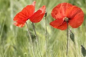 Blumen Im Juli : natur tipps im juli nabu ~ Lizthompson.info Haus und Dekorationen