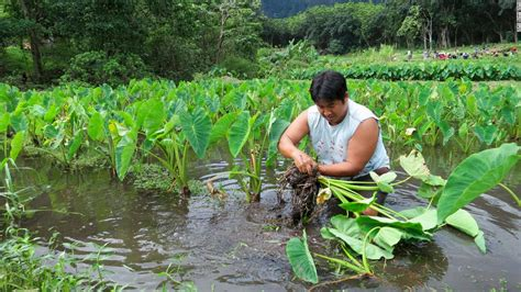 Related Keywords & Suggestions for hawaii local farmers
