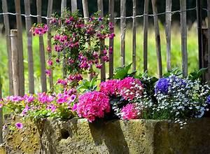 Garten Blumen Pflanzen : blumen nach jahreszeiten pflanzen ~ Markanthonyermac.com Haus und Dekorationen