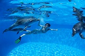 Memorable Dolphin Tour Adventures in Honolulu Earns Rave Reviews! - Dolphins and You - Honolulu ...