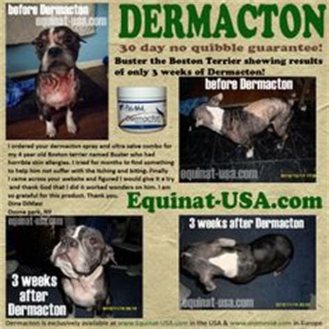 Images About Itchy Dogs On Pinterest Skin Problems