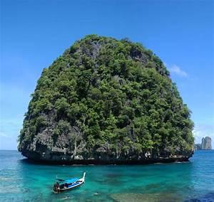 World's largest Sea turtle by Mygrapefruit on DeviantArt
