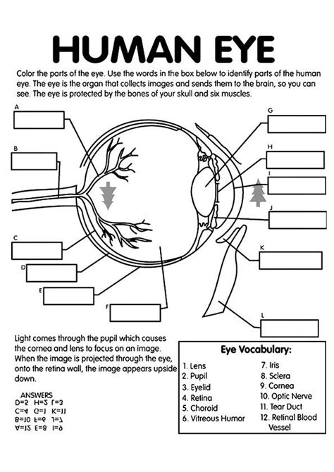 free anatomy coloring pages homeschool eye anatomy