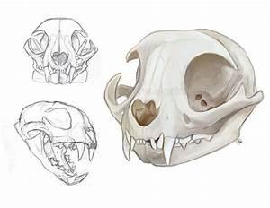 Cat Skulls By Gato