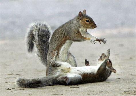 otus  head cat hunters  thin eurekas savage squirrel