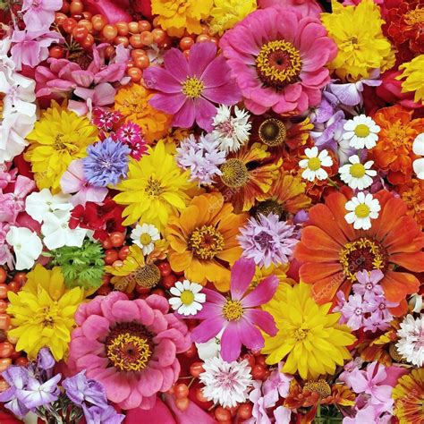Flower Background Colourful Flower Background A Background From Flowers