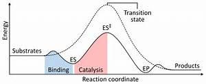Enzyme - Wikipedia