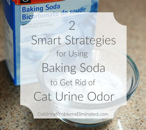 how to get cat urine smell out of hardwood floors
