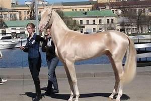 10 Prettiest Horses From Around The Globe