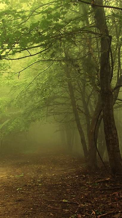 Forest Iphone Dark Fantasy Eery Nature Mist