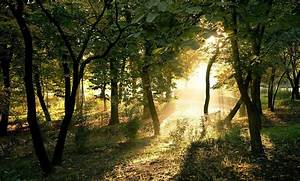 Photography, Nature, Plants, Trees, Landscape, Sun, Rays, Forest, Summer, Wallpapers, Hd, Desktop