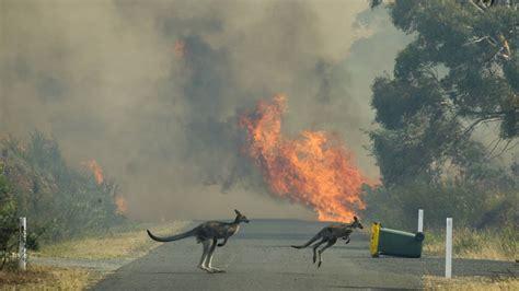 carwoola fire continues  burn yass tribune