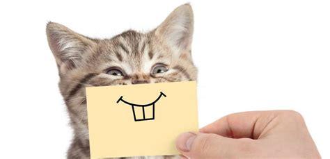 die zahnfleischentzuendung der katze mit hausmitteln