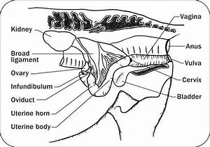 A  Provides Information On The Anatomy And Physiology Of A