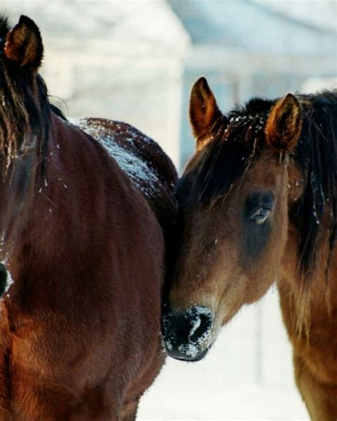 horse caring senior care horses challenges winter owner