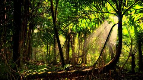 Rainforest Animal Wallpaper - rainforest animals wallpaper www pixshark