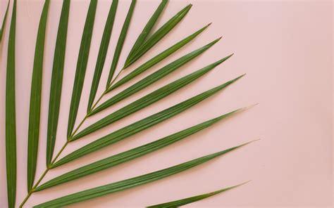 Palm Background Palm Leaves Desktop Wallpaper 21 Kostenlose Wallpaper F