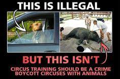 circus animal cruelty quotes quotesgram